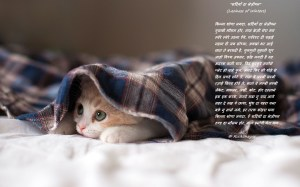 Cute-Sleeping-Lazy-Cat-Kitten-df