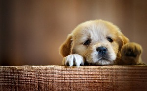 Puppy-dogs-34212464-1440-900